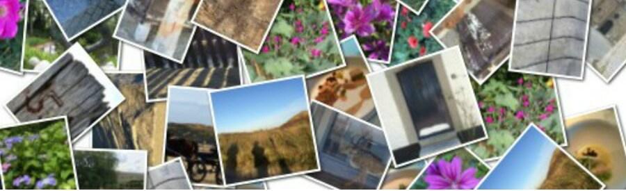 overzicht websites afbeeldingen