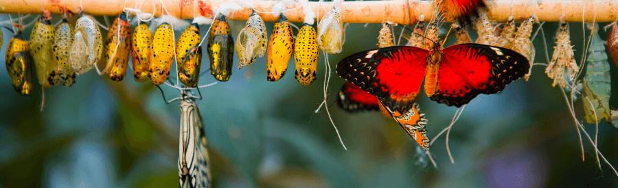 vlinderss geboorte